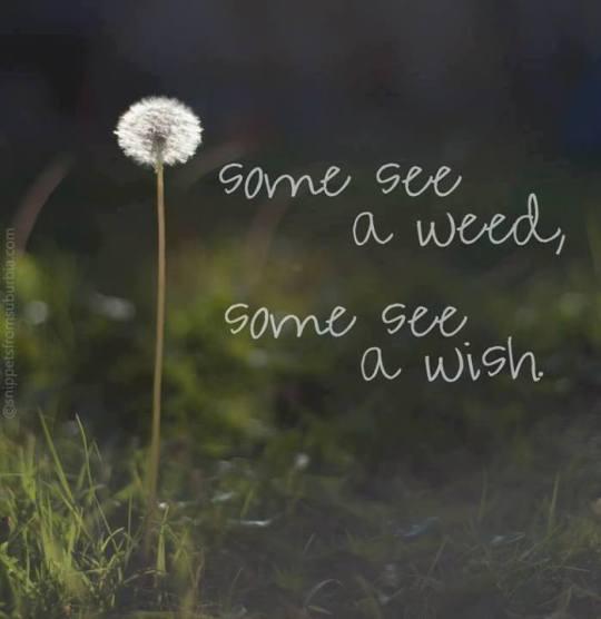 A Wish...