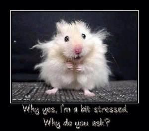 a bit stressed